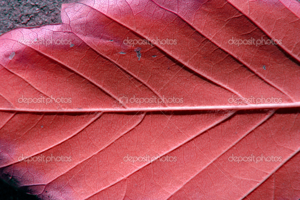 Up Close and Leaf