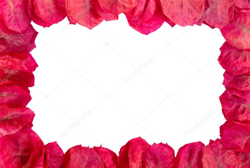 marco de flores de color púrpura — Foto de stock © ildi_papp #2626341