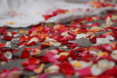 Rose petals on ground