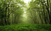 Fotografie lesní mystickou cestu
