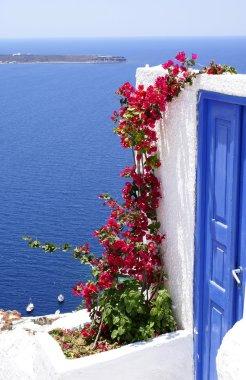 Old door and flowers