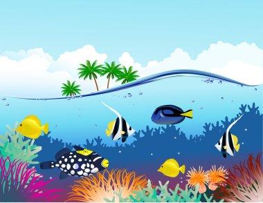 Sea life tropical