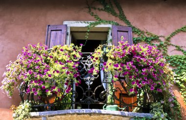 Flowers in Balcony