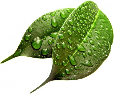 Green sheet background with raindrops