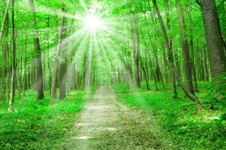 Photo pour La nature estivale. sentier en forêt verte avec lumière du soleil - image libre de droit