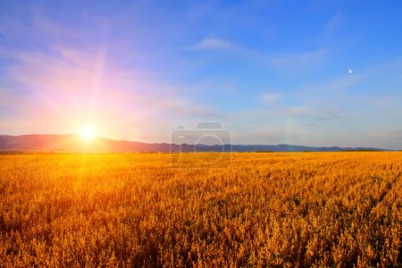 Photo for Sunrise in the field - Royalty Free Image