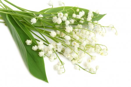 Photo for Bunch of lily of the valley on white background - Royalty Free Image