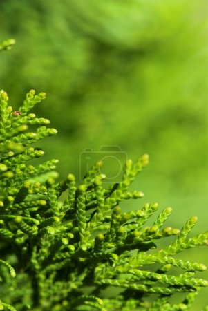Leaves with bokeh background