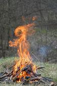 lapin de feu