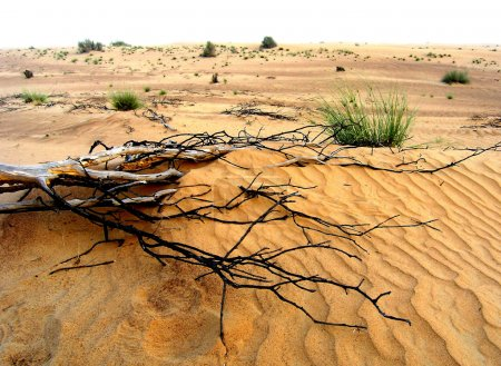 Branch in desert