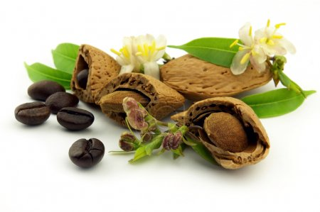 Almond with flowers and coffee beans