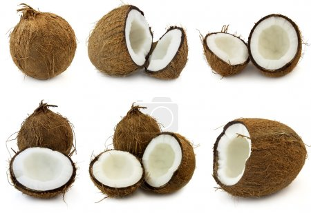 Photo for Coconut - Royalty Free Image