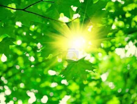 Photo for Green foliage with sun - Royalty Free Image