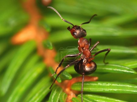 Ant singing on a branch
