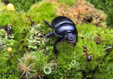 Alien bug in ants garden