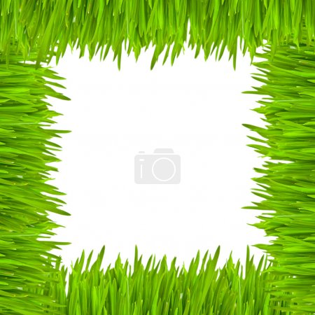 The frame of green grass