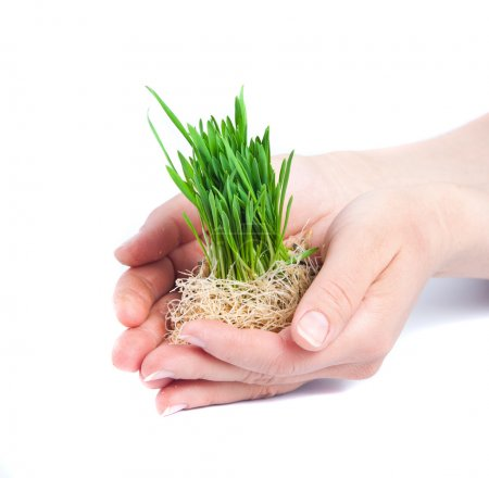 Green grass in women hands