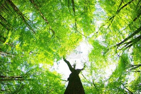 Foto de Fondo de bosque verde en día soleado - Imagen libre de derechos