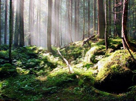 Photo pour Εκπληκτική θέα ως τον ήλιο που λάμπει μέσα από το δάσος σε μια ομιχλώδη ημέρα. - image libre de droit