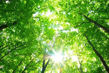 Photo pour Fond vert forêt en journée ensoleillée - image libre de droit