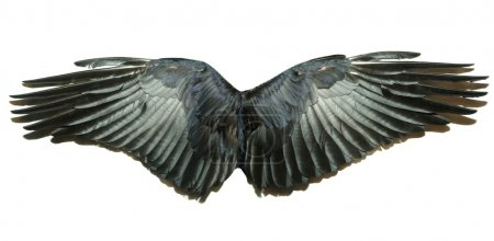 Photo for Pair of wings isolated on white - Royalty Free Image