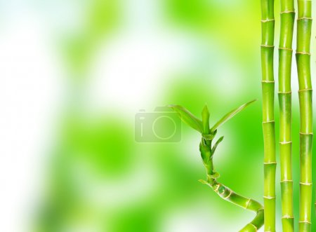 Photo for Beautiful bamboo isolated on green background - Royalty Free Image