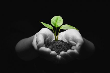 Photo for Hands holding sapling in soil - Royalty Free Image