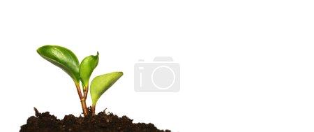 Photo pour Nouvelle vie - image libre de droit