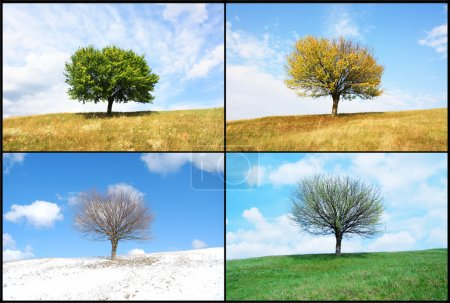 Photo for Alone tree in for season - Royalty Free Image