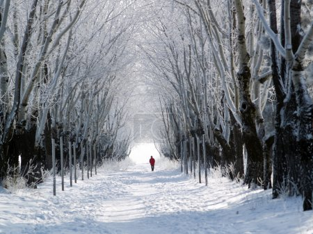 Man walking forest lane in winter