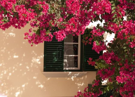 Window from house with beautiful flower