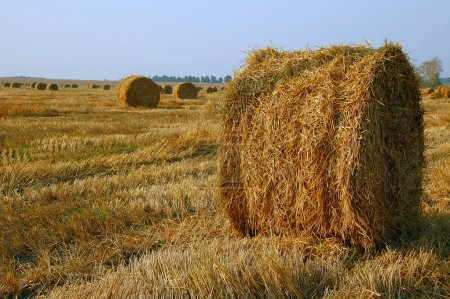 Haymaking at the End of Summer