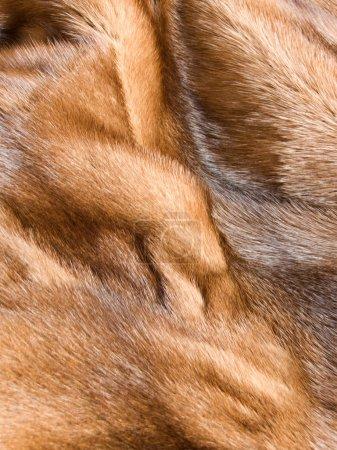 Photo pour Gros plan de la texture de fourrure de vison brun de luxe. Shallow dof. - image libre de droit