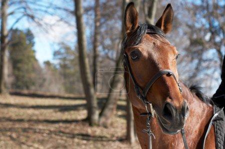 Beautiful race horse