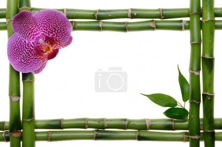 Photo for  - Royalty Free Image