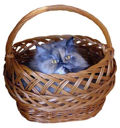 El gato en la cesta