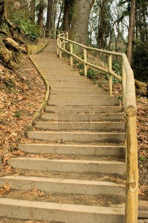 Photo pour Un escalier en bois serpente jusqu'à une colline boisée . - image libre de droit