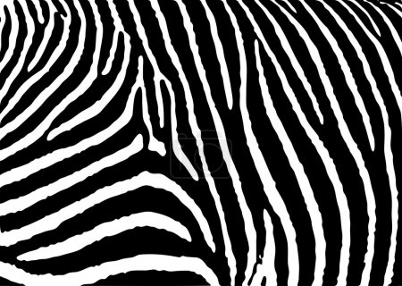 Photo for Black and white zebra pattern background with simple deisgn - Royalty Free Image