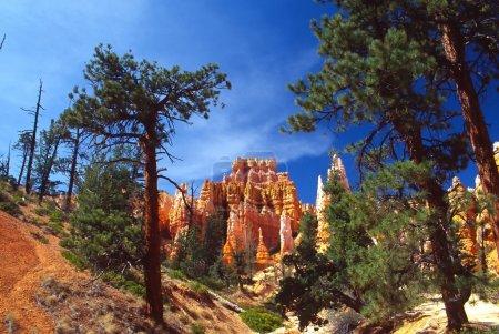 Photo pour Bryce canyon national park est un parc national situé dans le sud-ouest de l'utah aux États-Unis. contenus dans le parc, est le bryce canyon. Malgré son nom, th - image libre de droit