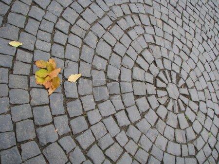 Oak leaves on a sett
