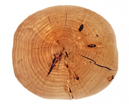 Finished wooden stump, isolated...