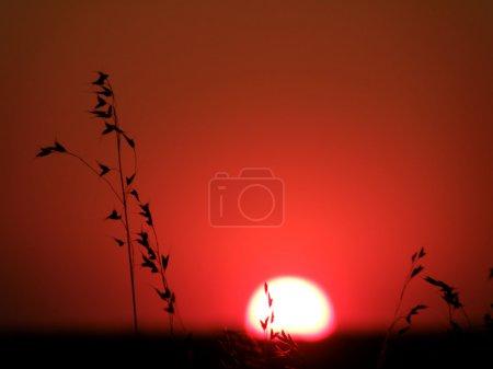 Photo pour Herbes sauvages qui poussent dans les prés contre un coucher de soleil rouge - image libre de droit