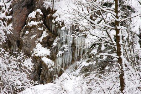 Photo pour Scène hivernale - image libre de droit