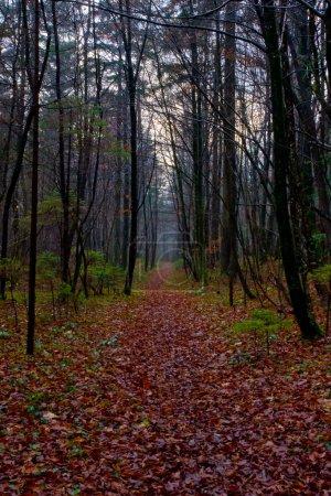 Photo pour Évolution de la forêt d'automne - image libre de droit