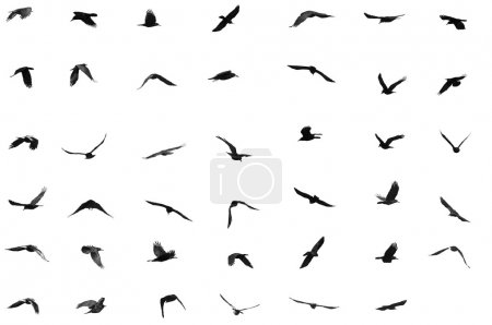 Photo for Birds for background - Royalty Free Image
