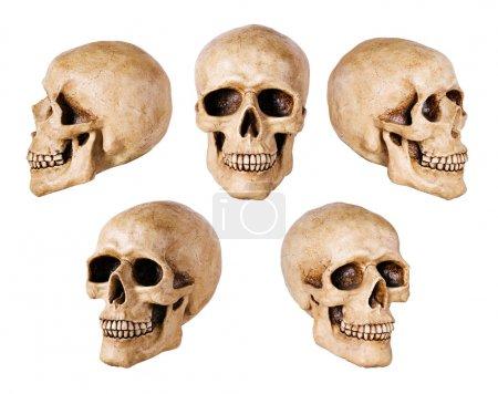 Synthetical skull on white