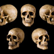 Synthetical skull many angle view on black with clipping path