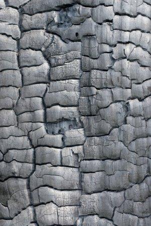 Texture of burned wood