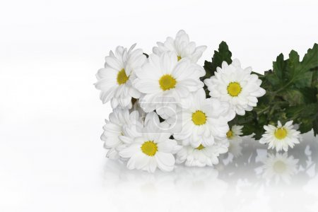 Ox-eye Daisy Bouquet