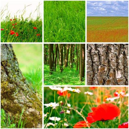 Photo pour Collection forêt et prairie - image libre de droit